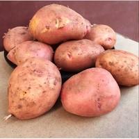 高山红皮土豆 中小混果 净重3斤