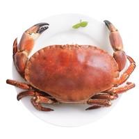 不打烊大排档:菜帮 鲜活面包蟹 600-800g