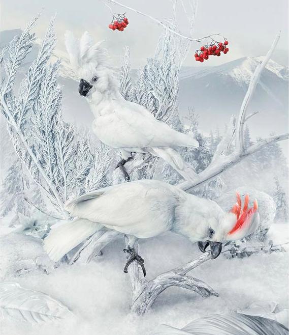 瑞典艺术家 马尔科·格里泽利 与 克里斯蒂安·克兰 摄影作品《凤头鹦鹉》