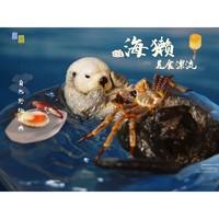 玩模总动员:自然野趣—《海獭的美食漂流》 仿真动物手办