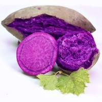 红高粱 山东新鲜紫薯 中果 10斤