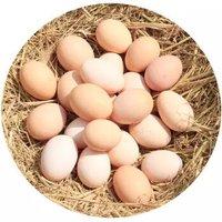 丑禾 新鲜鸡蛋 40枚装