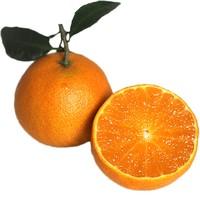 山棒子 爱媛38号果冻橙  大果  5斤