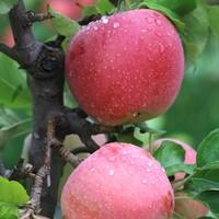 欣沃 山西红富士苹果 3斤装 65mm(含)-70mm(不含)