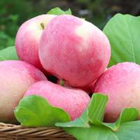 百果旺 苹果水果新鲜红富士 65mm(含)-70mm(不含) 10斤