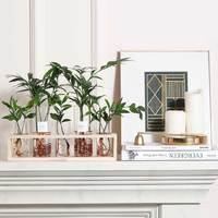 FlowerPlus 花加 水培绿植套装 桌面屏风系列(植株*5+花瓶*5+支架*1)