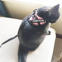 拾味八方 幼犬猫咪胸背带 XS (5-10斤)