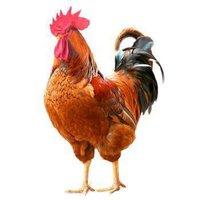 限地区:WENS 温氏 农养大公鸡 1.2kg *5件