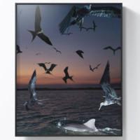 艺术品:Benoit Paillé 贝努瓦·帕耶 摄影作品《海鸟与海豚》