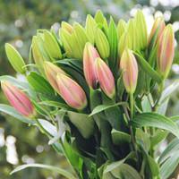 移动专享:云南香水百合鲜花 花束10朵 送保鲜剂