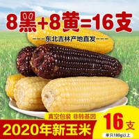 东北玉米 非转基因黑黏甜糯香玉米棒 真空装苞米  8黑8黄16棒 *3件