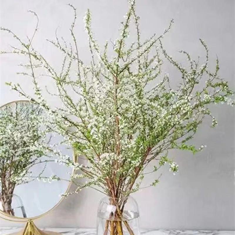 雪柳鮮枝盆栽帶花苞植物耐凍耐寒植物干支鮮切花干枝室內年宵花
