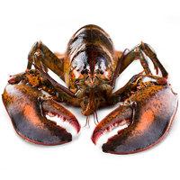 波士顿大龙虾鲜活特大波龙澳龙海鲜水产