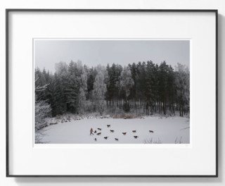 【pica photo】Linas Vaitonis  冬日谈 28 x 35 cm 限量50件