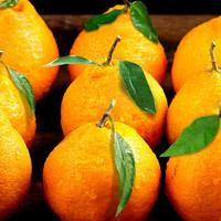 促销活动:京东 首届四川柑橘节活动来袭,邀请你来查看~