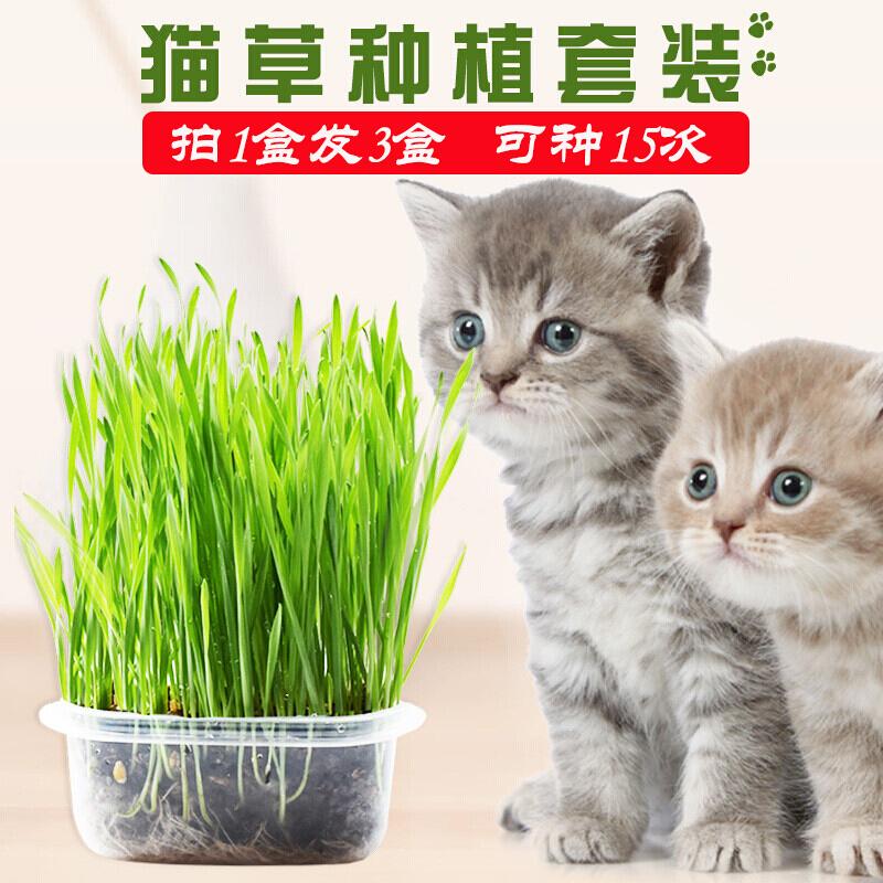 阿邁迪 貓草種子營養土培育盒套裝貓薄荷貓零食去毛球貓咪用品 貓草拍1盒發3盒 可種15次