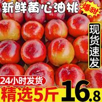 水果 现货黄心油桃5斤桃子应季当季新鲜整箱黄肉超甜脆桃水蜜桃10