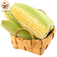 京东PLUS会员 : 杜胖子 新鲜水果玉米  1斤装