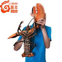 WECOOK SEAFOOD 味库海鲜 鲜活进口加拿大波士顿龙虾4900-5100g 1只 约10斤
