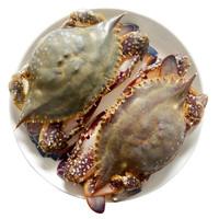 大洋世家 东海舟山梭子蟹 液氮零下196度活冻 海鲜水产 舟山地理保护标志 6-8两/只 *4斤