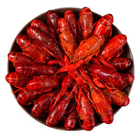 楚江红 潜江小龙虾 麻辣小龙虾 20-25只 6-8钱/只 1.35kg (净虾量750g) 盒装 *3件
