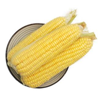 绿鲜知 甜玉米 约1kg 新鲜蔬菜  火锅涮菜 *7件