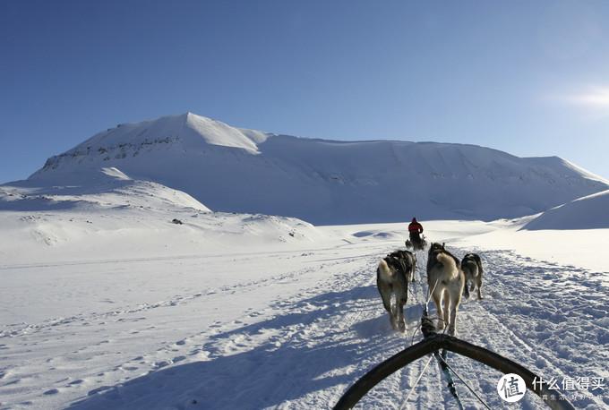 雪橇犬们,堆个雪人来约会吧! 冬季赏雪大盘点