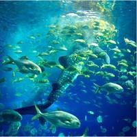 菲律宾杜马盖地 奥斯洛布鲸鲨+苏米龙岛一日游