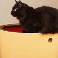 猫主子粑粑超级臭? 猫奴可入的好用猫砂盆