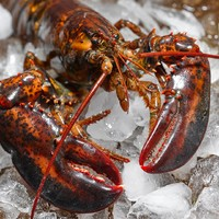 东海岸 加拿大急冻龙虾 450g *3件