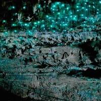 当地玩乐:新西兰怀托摩萤火虫洞 美出新高度 仿佛简直置身外太空!