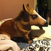 Accoutrements Horse Head Mask 马头面具 $8.99(约¥55)