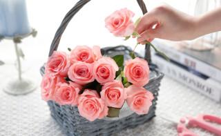 爱尚 玫瑰花束 鲜花速递 11枝