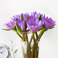 FLOWERPLUS 花加 单品鲜花 睡莲单束*10支