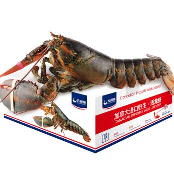 大渔场 波士顿龙虾 鲜活 (6kg)