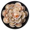 citilink 协东盛 冷冻 半壳扇贝 (500g,20-25枚)