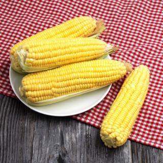 绿鲜知 云南甜玉米 水果玉米 约2.5kg 6-9根