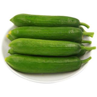 绿鲜知 荷兰黄瓜 约600g 新鲜蔬菜