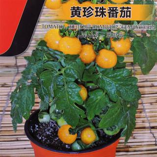 花儿朵朵 蔬菜种子 黄珍珠番茄 50粒
