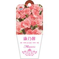 京东PLUS会员 : DS 北京东升种业 花卉种子 康乃馨 20粒 *3件