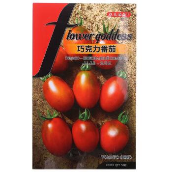 花儿朵朵 蔬菜种子 巧克力番茄 50粒