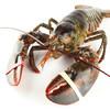 大渔场 波士顿龙虾 保活 6kg 2608元包邮(需用券)