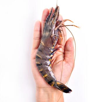 京东生鲜 泰国活冻黑虎虾(特大号) ( 17-26只 850g)