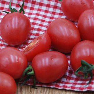 绿鲜知 圣女果 小番茄 500g
