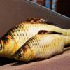 瓜洲牧 鲫鱼抱枕 20cm 送猫薄荷