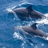 观鲸鲨追海豚!上海/成都-菲律宾宿务+薄荷岛8天6晚(3晚宿务+3晚薄荷岛) 3485元起/人