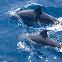 自由行:观鲸鲨追海豚!上海/成都-菲律宾宿务+薄荷岛8天6晚(3晚宿务+3晚薄荷岛)