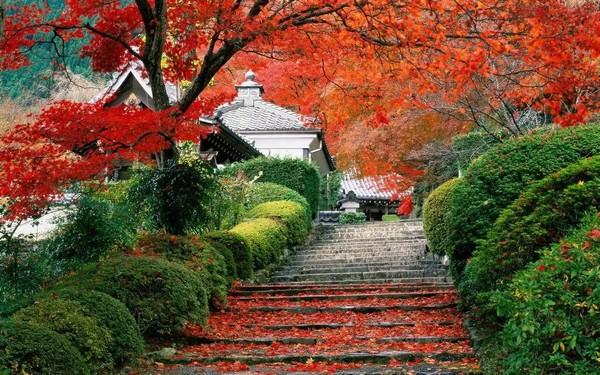 南京栖霞山的枫叶就快红了!这可是中国四大赏枫圣地之一,N多皇帝都来过~