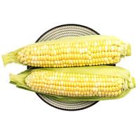绿鲜知 水果玉米 黄白粒玉米 约1kg 新鲜蔬菜