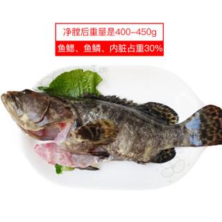 渔传播 活杀海南石斑鱼 1条 海鲜水产 活鱼现杀